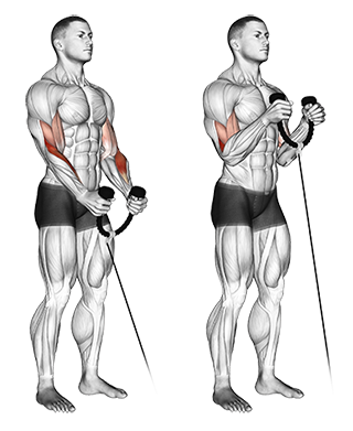 Bicep cable curls